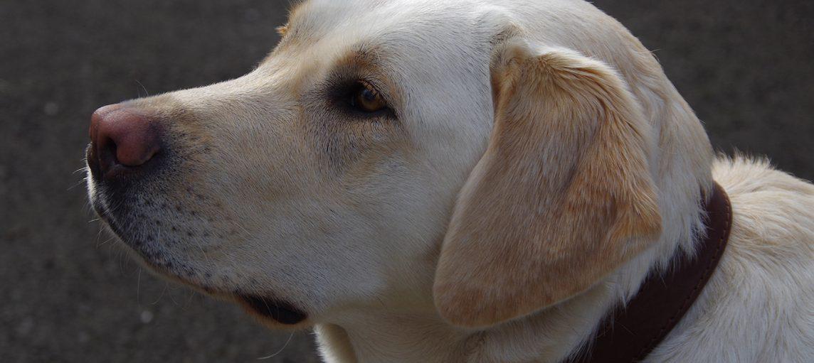 Remise de chien : Nala